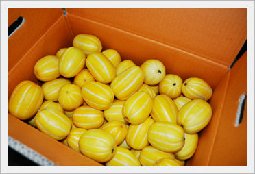 [Fruit-Vegetables] Oriental Melon for Expo...
